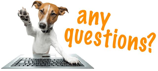 Question dog